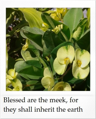 Postcard of meek flowers
